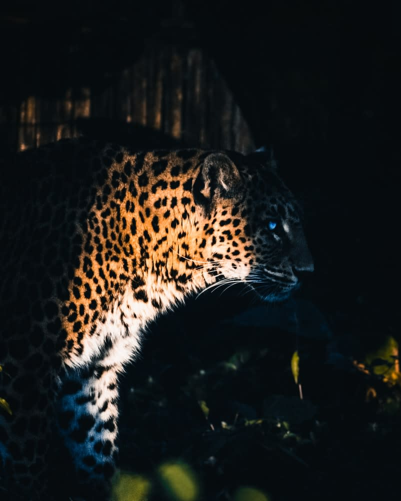 Yggdrasil collabora con ReelPlay per rilasciare la Jaguar SuperWays di Bad Dingo